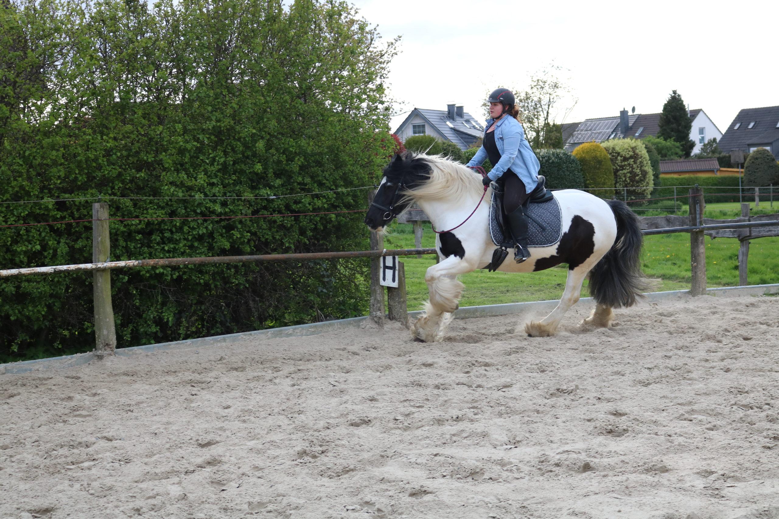 IMG_2847 Kyra und Joy Reiten mit Halsring die pferdegrundschule