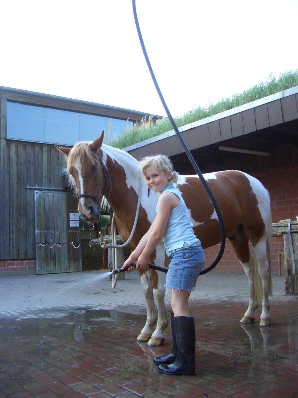 Natural Horsemanship Schule Dortmund