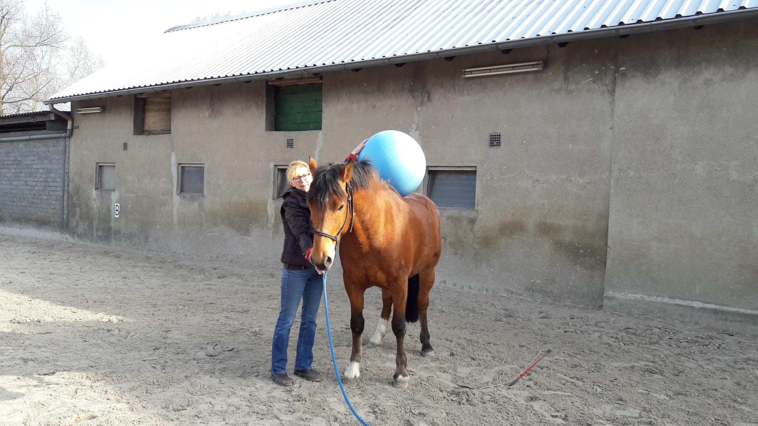 20170326_101723 die pferdegrundschule popeye und der blaue Ball