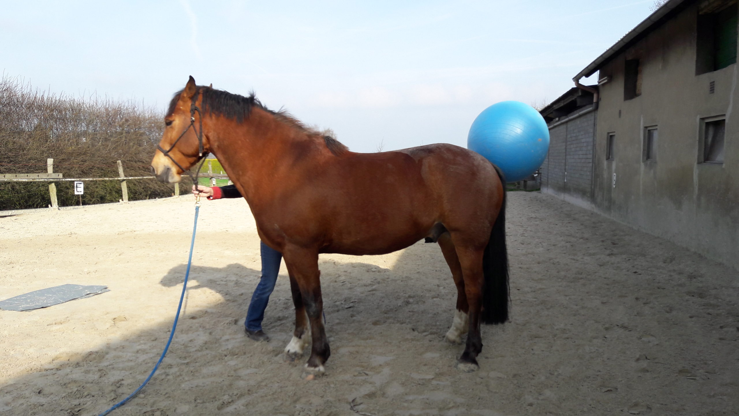 20170326_101730 die pferdegrundschule popeye und der blaue Ball