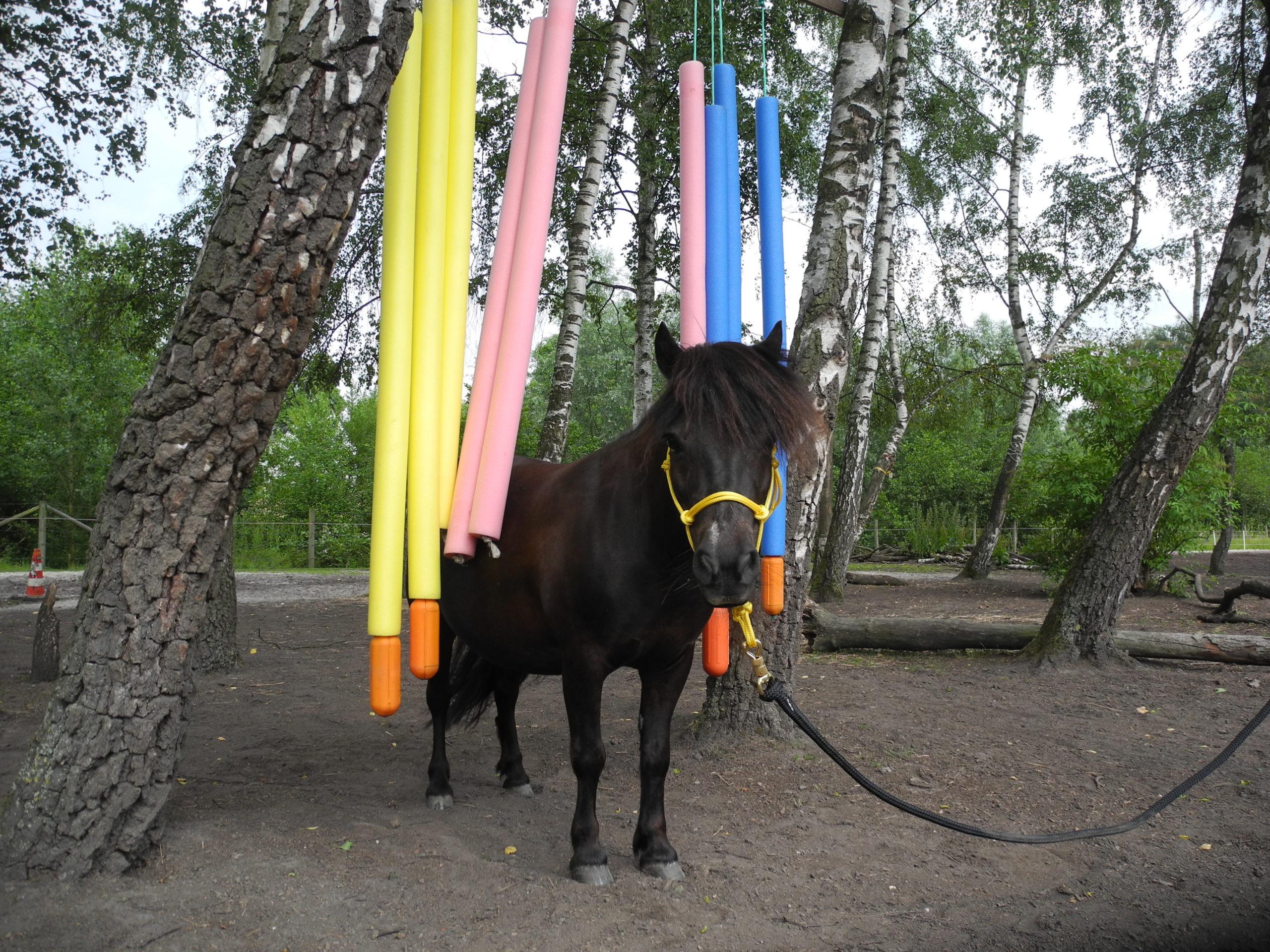 Die pferdegrundschule Mini