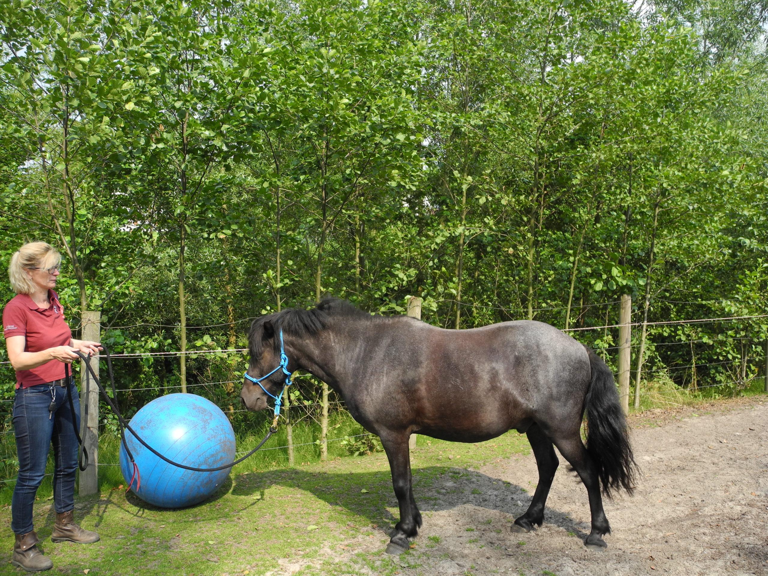 Die pferdegrundschule Eddy