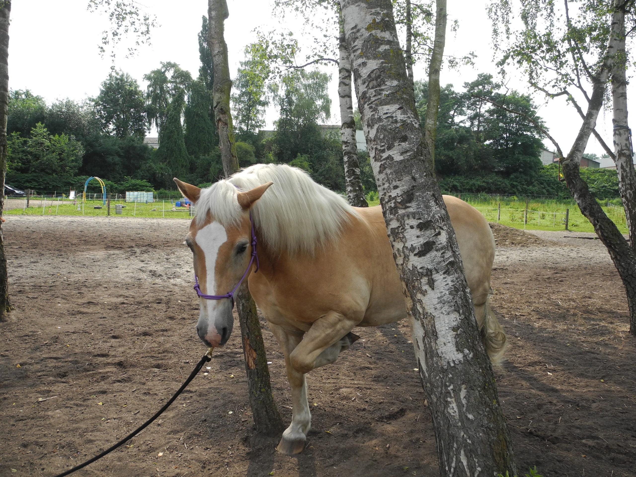Die pferdegrundschule Sam