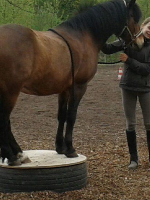 Die Pferde-Grund-Schule Nele und Salvi