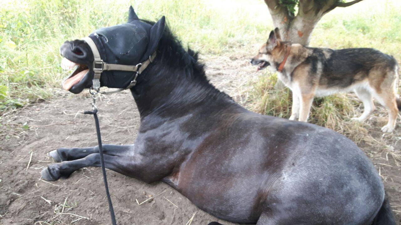 IMG-20170630-WA0010 die pferdegrundschule Eddy lacht