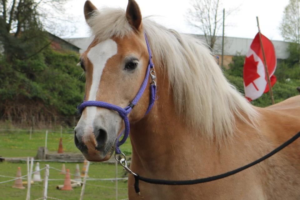 Natural Horsemanship Trainerin Christine Bönninger - Horsemanship Kurse Dortmund NRW