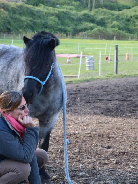 Die pferdegrundschule tatjana kirsche und eddy