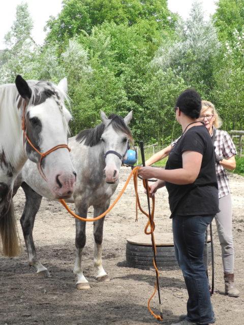 Die Pferde Grundschule Horsemanship Grundlagen