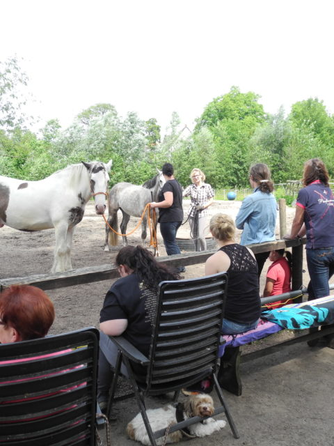 Horsemanship Anfängerkur Die Pferdegrundschule
