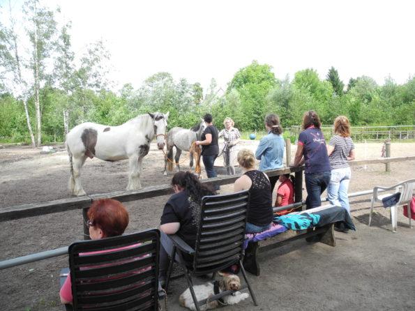 Zuschauer und Teilnehmer in der Pferdegrundschule