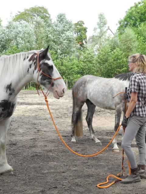 Die Pferdegrundschule Pferd spiegelt Energie Einsteigerkurs