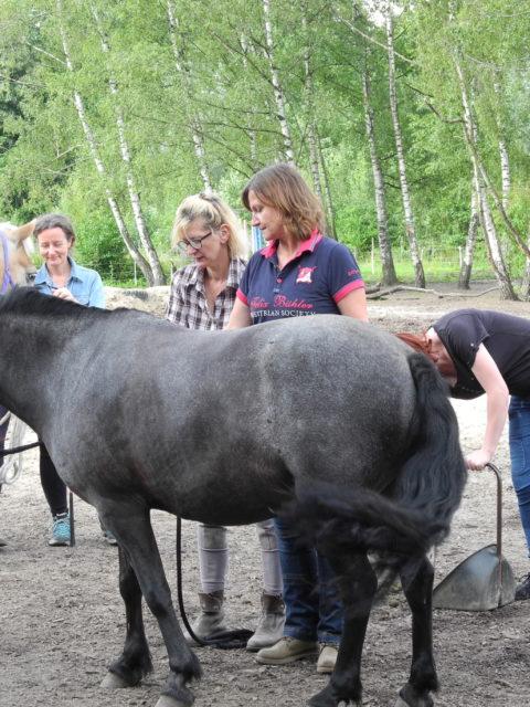 Die Pferdegrundschule Einsteigerkurs
