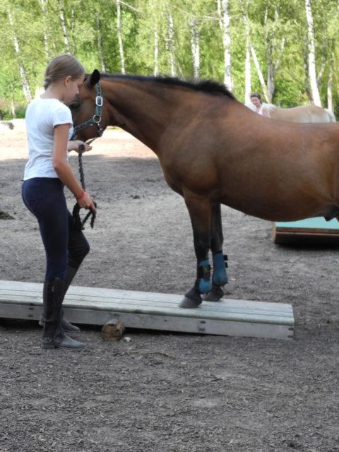 Die Pferdgrundschule Ponywippe