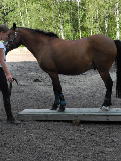 Die Pferde Grund Schule Erste Schritte auf der Ponywippe