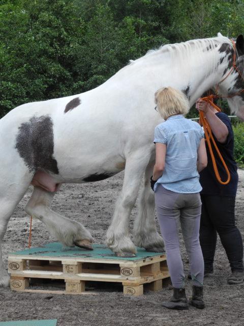 Die Pferde Grund Schule Tinker Balou und Lena