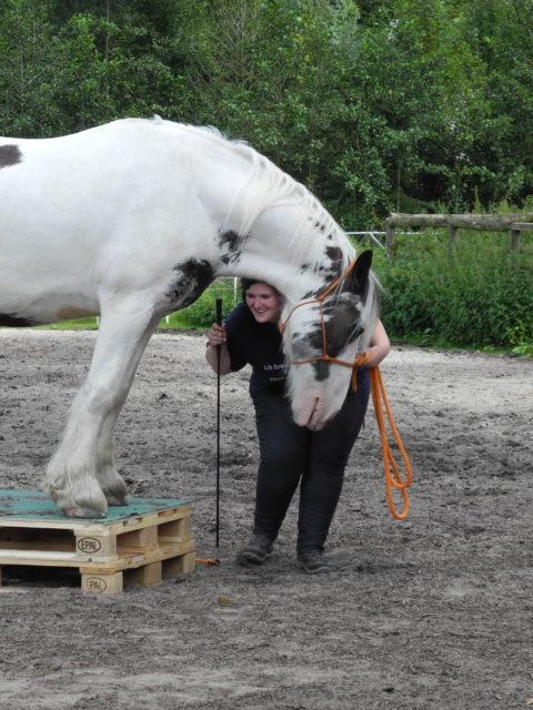 Die Pferdegrundschule Balou und Lena
