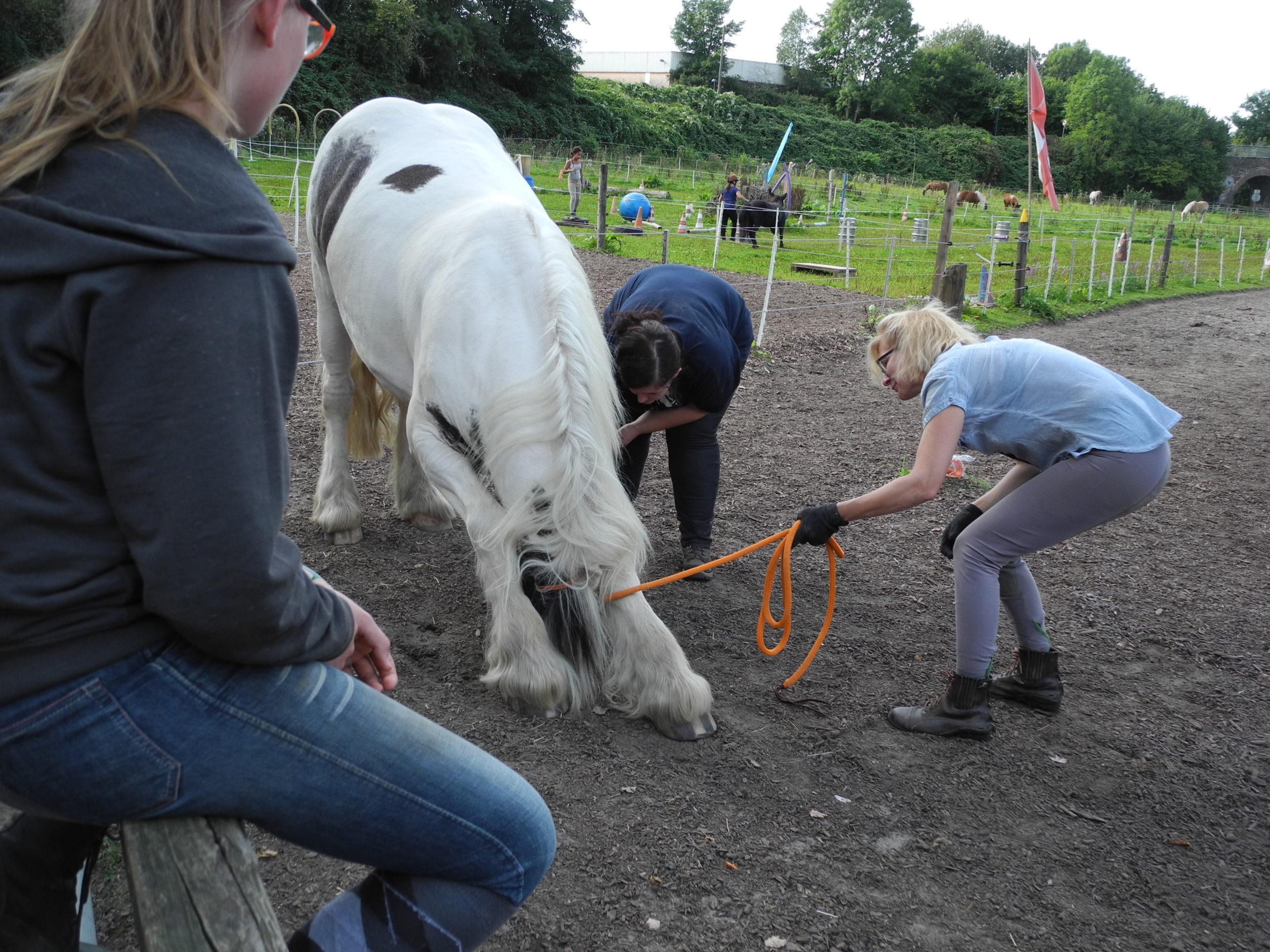 Die Pferdegrundschule Balou macht eine Verbeugung