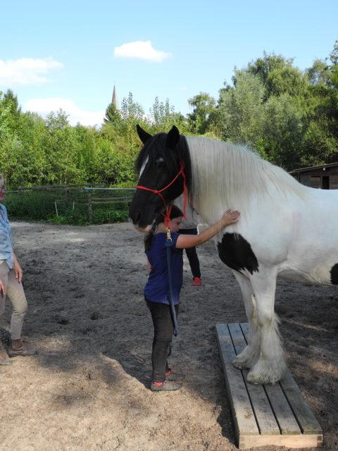 Die Pferdegrundschule Früh übt sich