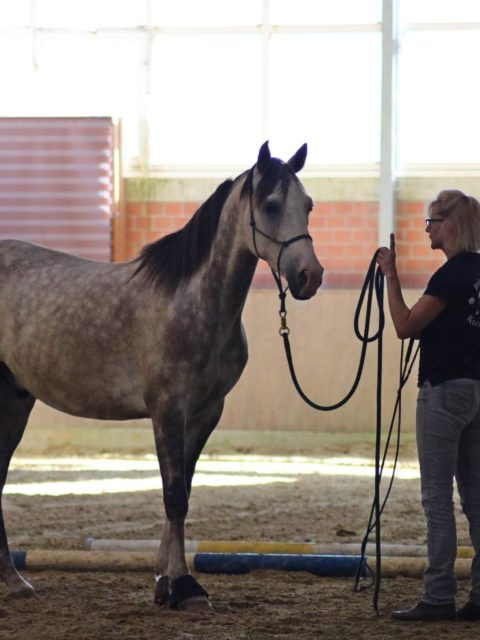Horsemanship Liberty Kurs bei Claudia Miller Anlage PRE Niederrhein Nicole Hoff